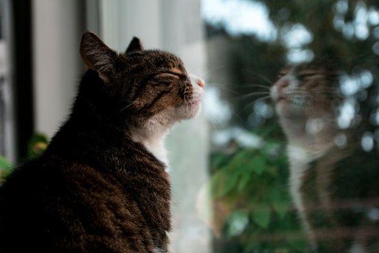 ventanas madrid baratas